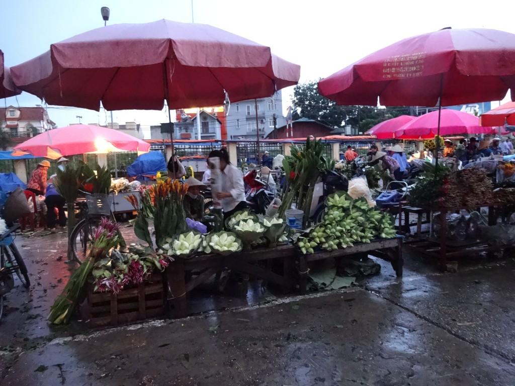 花市場蓮1