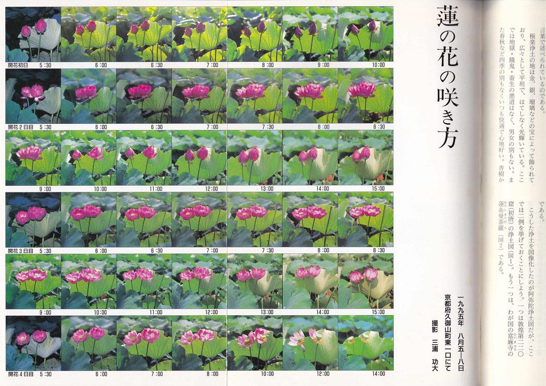 『蓮の話』2号綴じ込みカラー_