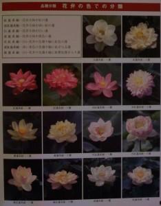 花弁にお色で分類